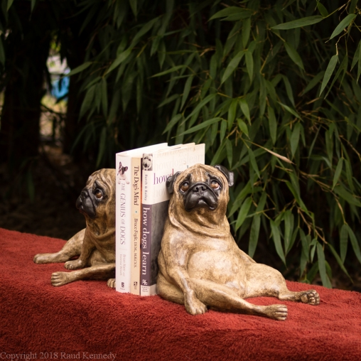 fawn pug bookends (9 of 13)