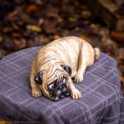napping pug statue in fawn and black (10 of 16)