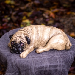 napping pug statue in fawn and black (14 of 16)