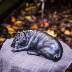 napping pug statue in fawn and black (2 of 16)