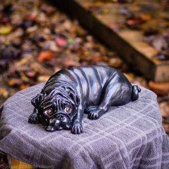 napping pug statue in fawn and black (3 of 16)