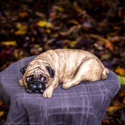 napping pug statue in fawn and black (8 of 16)