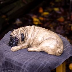 napping pug statue in fawn and black (9 of 16)